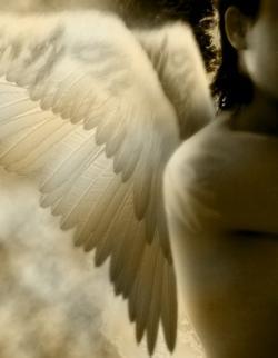 Eileen Anglin's Angel Blog http://www.whiterosepath.com