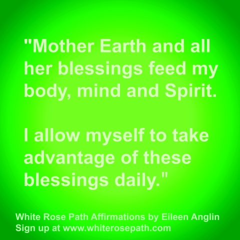 Nature the Healer White Rose Affirmation by Eileen Anglin