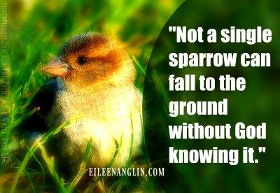 http://eileenanglin.com/not-a-sparrow-falls/